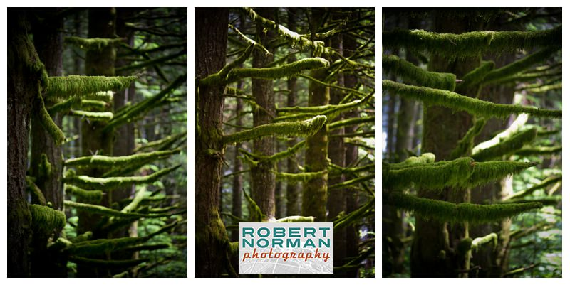 Mt-hood-scenic-byway-oregon-photography-photos-national-forest