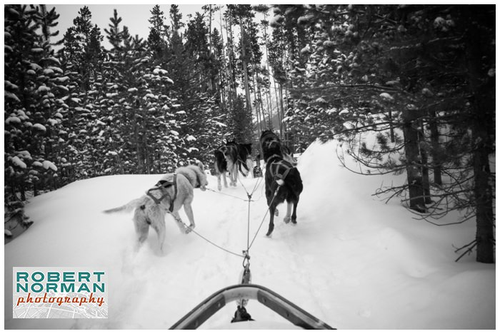 montana-dog-sledding-Yellowstone-national-park