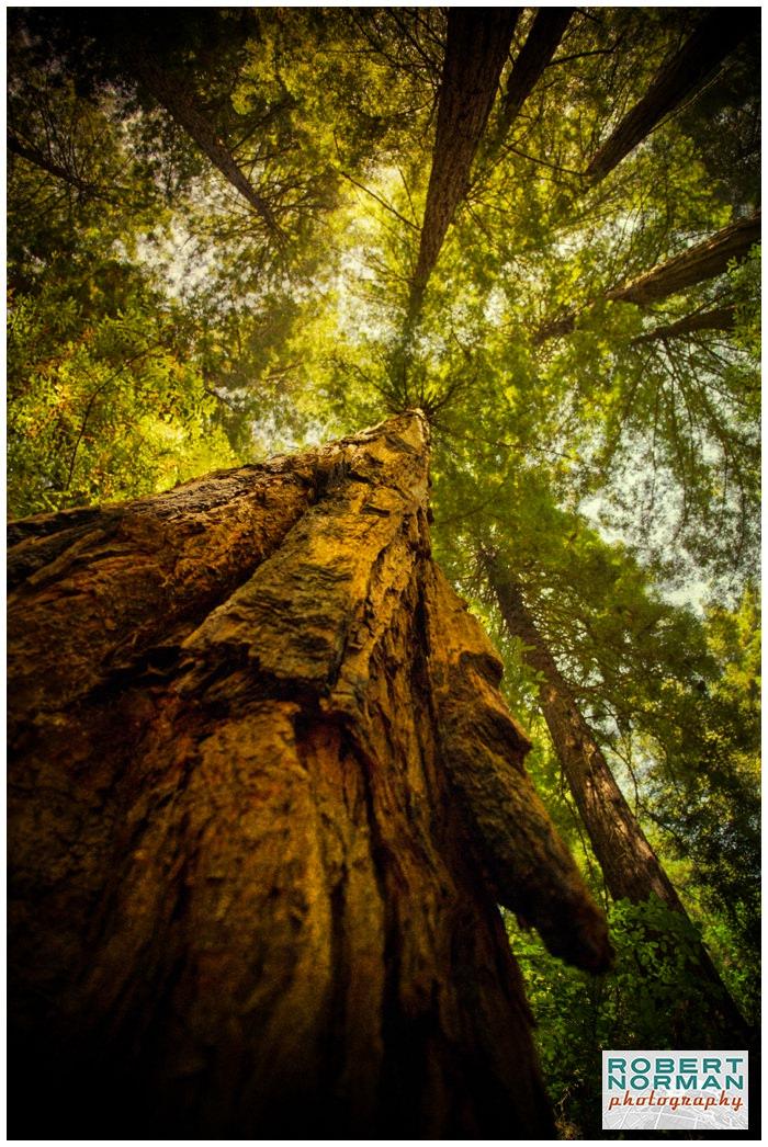 muir-woods-photographs-california-ca-san-francisco